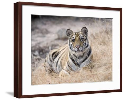 Bengal Tiger, Young Female Lying in Soft Grass, Madhya Pradesh, India-Elliot Neep-Framed Art Print