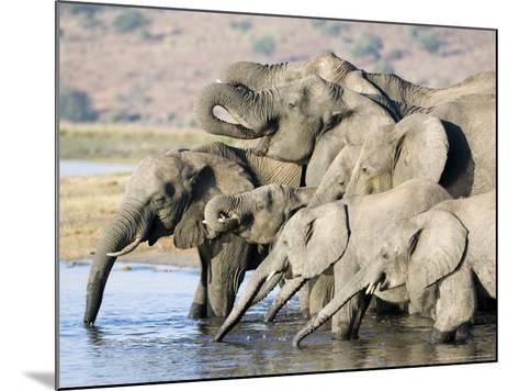 African Elephant, Family Drinking, Botswana-Mike Powles-Mounted Photographic Print