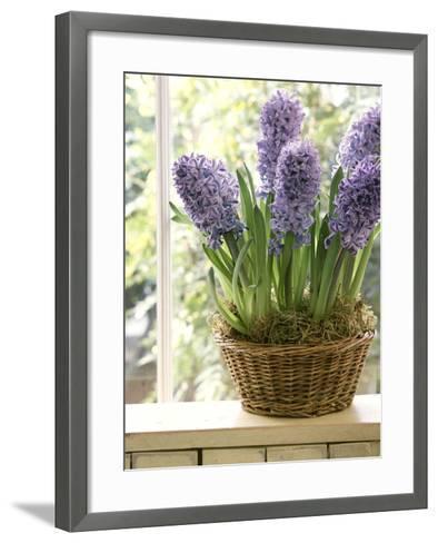 Hyacinthus (Hyacinth) in Basket on Windowsill-Lynne Brotchie-Framed Art Print