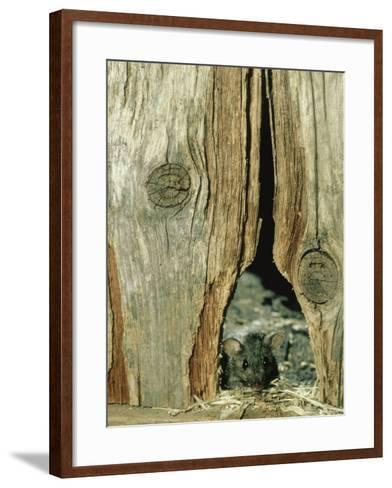 House Mouse-Liz Bomford-Framed Art Print