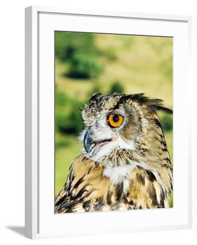 Eagle Owl, Portrait of Captive Adult, UK-Mike Powles-Framed Art Print