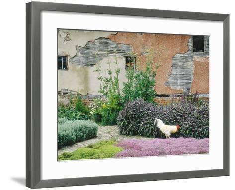 Formal Herb Garden Thyme-Jacqui Hurst-Framed Art Print