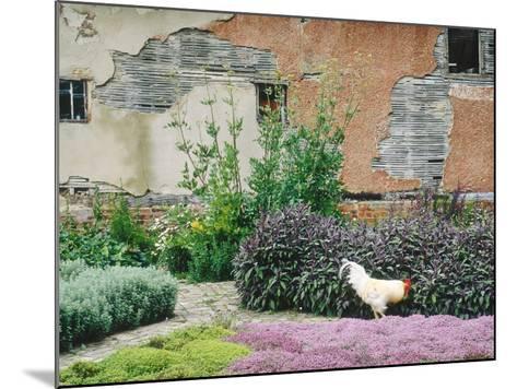 Formal Herb Garden Thyme-Jacqui Hurst-Mounted Photographic Print