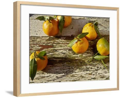 "Clementine Fruits & Leaves (Citrus Reticulata ""Clementine"")-Jacqui Hurst-Framed Art Print"