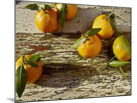 """Clementine Fruits & Leaves (Citrus Reticulata """"Clementine"""")-Jacqui Hurst-Mounted Photographic Print"""