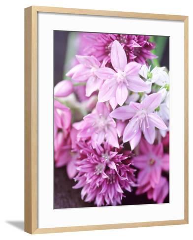 "Bunch 0F Allium Scoenoprasum, Allium Unifoloium & Allium Oreophilum ""Zwanenburg""-Lynn Keddie-Framed Art Print"