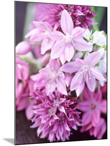 "Bunch 0F Allium Scoenoprasum, Allium Unifoloium & Allium Oreophilum ""Zwanenburg""-Lynn Keddie-Mounted Photographic Print"