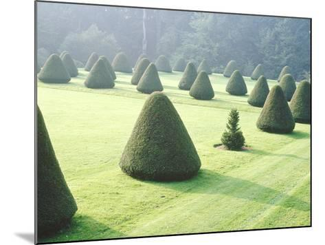 Yew Topiary Parnham House, Dorset-Jacqui Hurst-Mounted Photographic Print