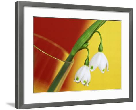 """Leucojum Vernum """"Spring Snowflake"""" in Glass Vase with Red & Yellow Background-James Guilliam-Framed Art Print"""