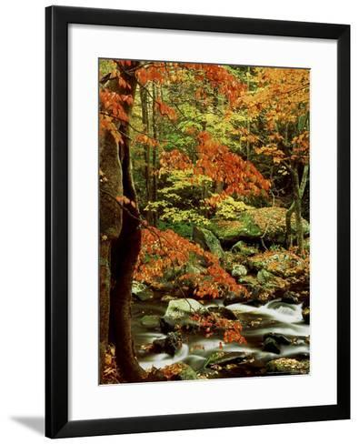 Fall Colour Along Middle Prong of Little River, USA-Willard Clay-Framed Art Print