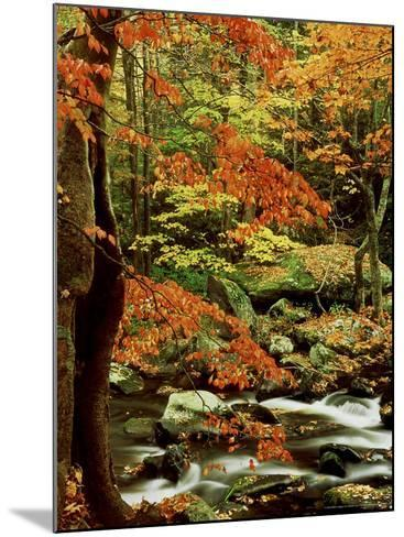 Fall Colour Along Middle Prong of Little River, USA-Willard Clay-Mounted Photographic Print