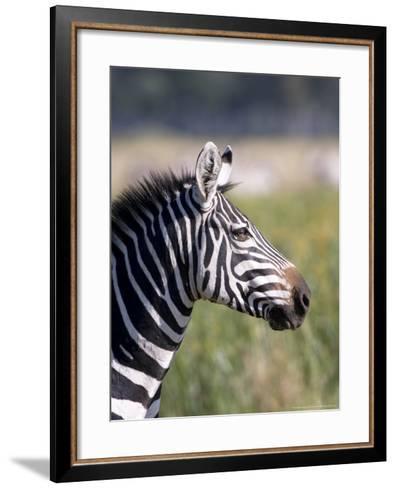 Burchells Zebra, Stallion Head Profile, Kenya-Mike Powles-Framed Art Print