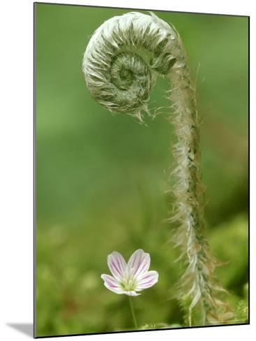 Fern Unfolding Over Spring Beauty, Great Smoky Mountains National Park TN-Adam Jones-Mounted Photographic Print