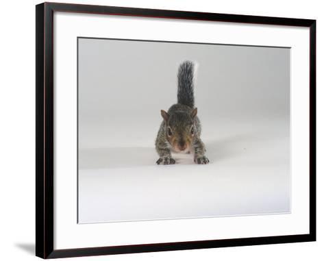 Grey Squirrel-Les Stocker-Framed Art Print