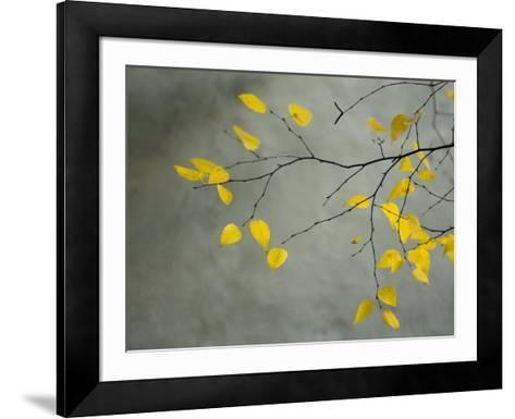 Yellow Autumnal Birch (Betula) Tree Limbs Against Gray Stucco Wall-Daniel Root-Framed Art Print