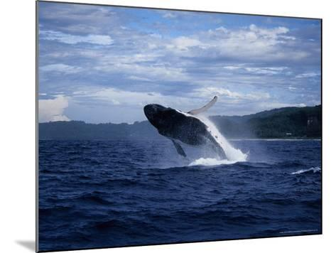 Humpback Whale, Breaching, Polynesia-Gerard Soury-Mounted Photographic Print