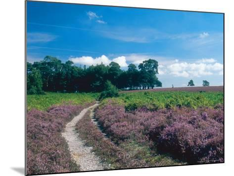 Bell Heather and Ling, Ibsley Common, Hampshire, UK-Ian West-Mounted Photographic Print