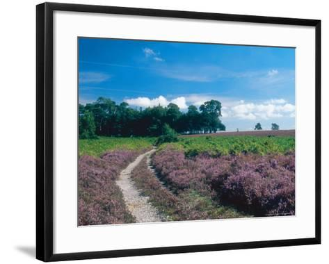 Bell Heather and Ling, Ibsley Common, Hampshire, UK-Ian West-Framed Art Print