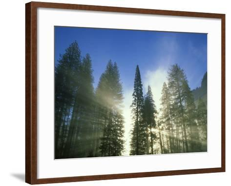 Lightbeams Streaming Through Pine Trees at Sunrise, Yosemite National Park, CA-Adam Jones-Framed Art Print