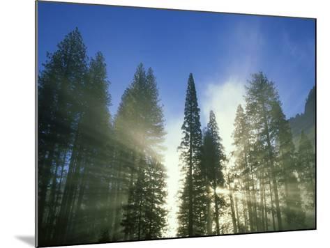 Lightbeams Streaming Through Pine Trees at Sunrise, Yosemite National Park, CA-Adam Jones-Mounted Photographic Print