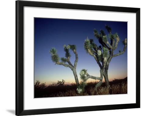 Joshua Tree, California, USA-Olaf Broders-Framed Art Print