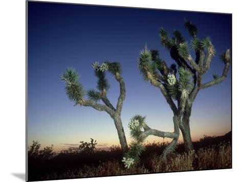 Joshua Tree, California, USA-Olaf Broders-Mounted Photographic Print