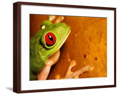 Red-Eyed Tree Frog, Close-up of Head and Front Feet, Costa Rica-Roy Toft-Framed Art Print