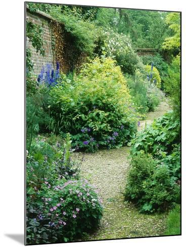 Walled Garden, Winding Path Through Herbaceous Border-Lynn Keddie-Mounted Photographic Print