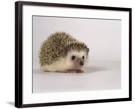 Four-Toed Hedgehog-Les Stocker-Framed Art Print