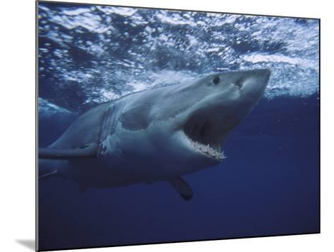 Great White Shark-Gerard Soury-Mounted Photographic Print