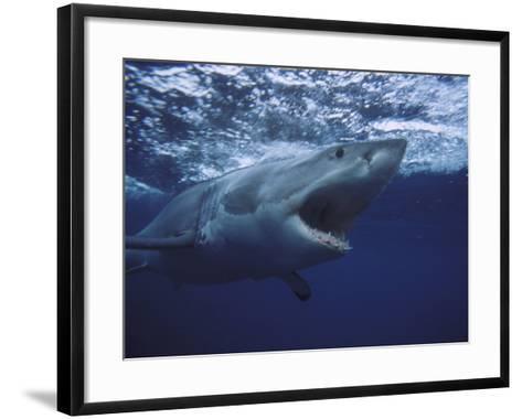Great White Shark-Gerard Soury-Framed Art Print