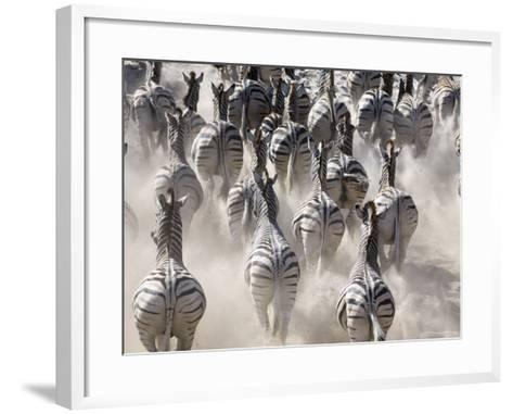 Burchells Zebra, Group Running in Dust, Botswana-Mike Powles-Framed Art Print