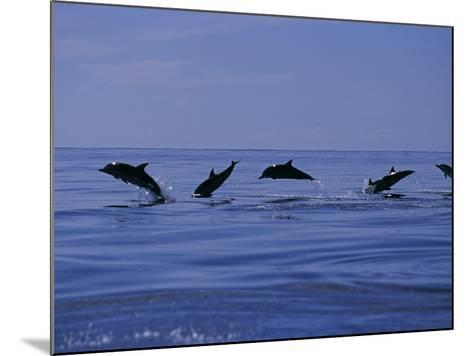 Striped Dolphins, Porpoising, Azores, Portugal-Gerard Soury-Mounted Photographic Print