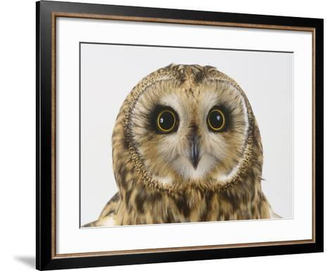 Short-Eared Owl, Asio Flammeus-Les Stocker-Framed Art Print