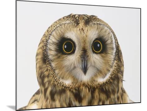 Short-Eared Owl, Asio Flammeus-Les Stocker-Mounted Photographic Print