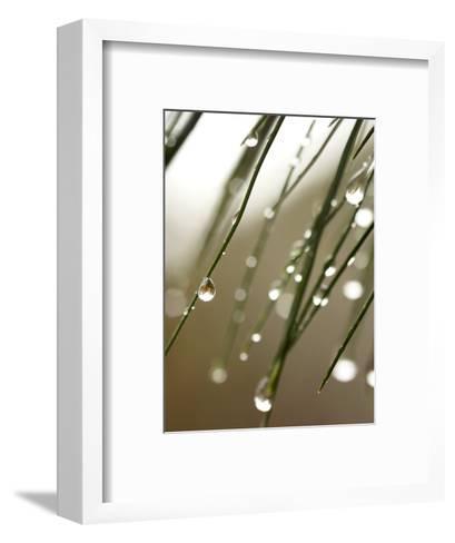 Rain Drops on Pine Branch Needles-Ellen Kamp-Framed Art Print