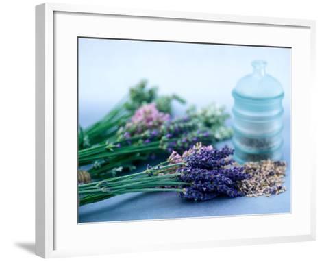 Cut Lavender, Dried Lavender & Glass Pot-Lynn Keddie-Framed Art Print