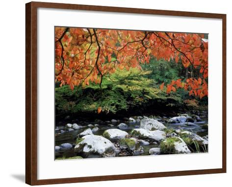 Dogwood in Fall Colour Over Middle Prong of Little River, USA-Willard Clay-Framed Art Print