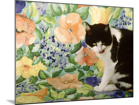 Black and White Cat Sitting on a Floral Chair-Lynne Brotchie-Mounted Photographic Print