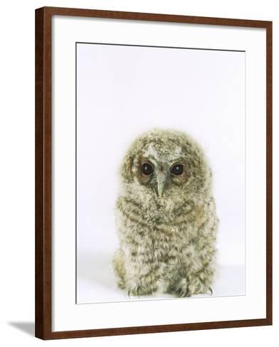 Tawny Owl, Young-Les Stocker-Framed Art Print