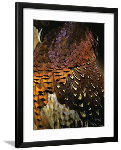 A Pheasant with Colourful Feathers-Nicolas Leser-Framed Art Print