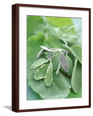 Various Sage Leaves--Framed Art Print