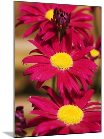 Red Gerbera in the Open Air--Mounted Photographic Print
