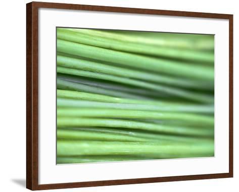 Chives-Ulrike Holsten-Framed Art Print