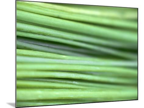 Chives-Ulrike Holsten-Mounted Photographic Print