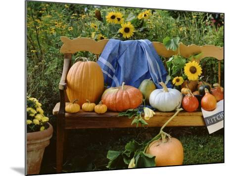 Pumpkin Still Life on Wooden Bench in Country Garden--Mounted Photographic Print