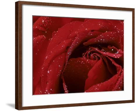 First Red Rose--Framed Art Print