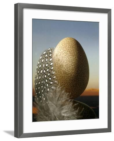 A Guinea Fowl Egg and Feather-Manfred Seelow-Framed Art Print