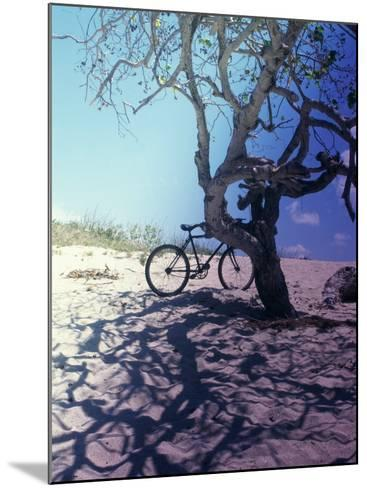 Bicycle Parked Against a Tree--Mounted Photographic Print