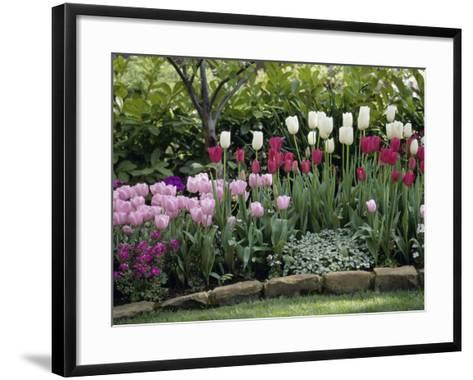 Tulips--Framed Art Print